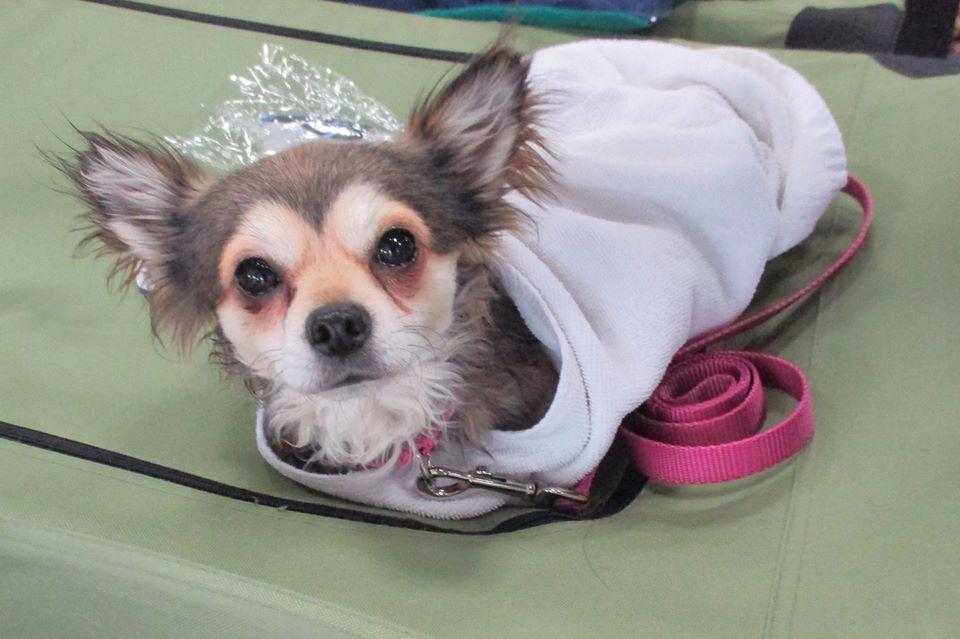 PA Caring Hearts Dog